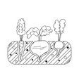 thin line gardening bed with vegetables vector image vector image