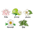 engraved organic herbs spices and flowers vector image vector image
