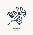 ginkgo flat line icon chinese medicinal plant vector image vector image