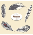 Feathers vector image vector image