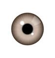realistic human eye vector image