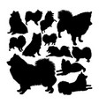volpino italiano dog animal silhouettes vector image vector image