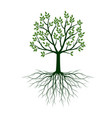green tree with leaves and roots outline vector image vector image