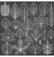 Set of tree leaves on chalkboard background vector image vector image