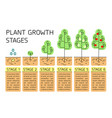 tree growth stages infographics vector image