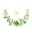 watercolor wreath of mint branches isolated vector image vector image