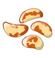 brazil nuts icon cartoon style vector image