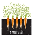 Growing Carrots Scratchy Drawing and Lettering vector image vector image