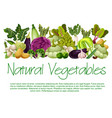 natural vegetables organic food poster vector image