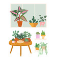 plants at home garden flower pots greens stand vector image