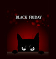 black friday poster with angry cat vector image