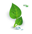 Green leaves dew drops vector image vector image