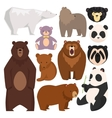 Different style bears vector image