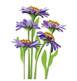 floral design purple aster vector image vector image