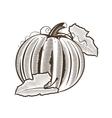 Pumpkin in vintage style Line art vector image vector image