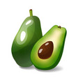 realistic avocado isolated on white vector image