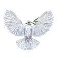 white dove holding olive branch in his beak vector image