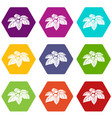 whortleberries icons set 9 vector image