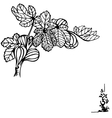 fig branch vector image vector image