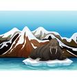 A walrus vector image