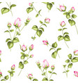 luxurious rose wallpaper vector image vector image