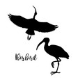 silhouettes ibis set icons flying and vector image vector image