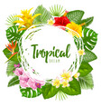 summer tropical frame design vector image