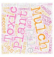 Beware of Toxic Mulch text background wordcloud vector image vector image