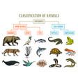 classification animals reptiles amphibians vector image vector image