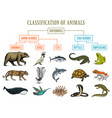 classification of animals reptiles amphibians vector image vector image