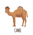 cute camel in flat style vector image vector image