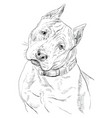 american staffordshire terrier hand drawing vector image vector image