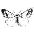 cankerworm moth vintage vector image vector image