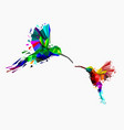 isolated low poly colorful couple hummingbird vector image vector image