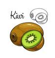 kiwi drawing icon vector image vector image