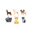 cats and dogs of different breeds set cute vector image
