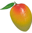 ripe mango with leaf vector image
