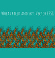 gold wheat rye field and blue sky vector image