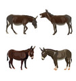 donkey set collection vector image