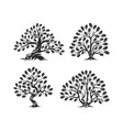 huge and sacred oak tree silhouette logo isolated vector image vector image