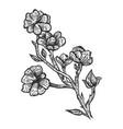 magnolia flower sketch engraving vector image vector image