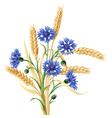 cornflower ears big vector image vector image