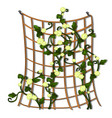 decorative hedge made of grid tied brown rope with vector image