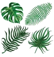 with exotic leaf vector image vector image