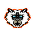 himalayan cat mascot vector image