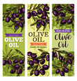 olives bunch sketch banners for olive oil vector image vector image