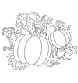 pumpkins vegetables vector image vector image