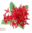 Red ixora flower on A White Background vector image
