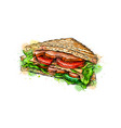sandwich fast food from a splash watercolor vector image vector image