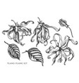 collection of hand drawn black and white vector image vector image